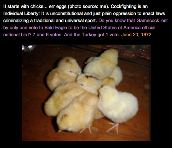 they-started-as-chicks