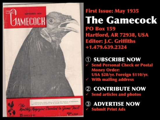 The Gamecock (Magazine)